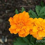 Orange Marigolds   # Poster