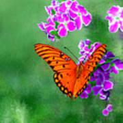 Orange Monarch Butterfly Poster