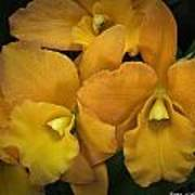 Orange Orchid Group Poster