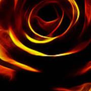 Orange Passion Rose Poster