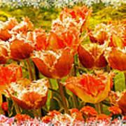 Orange Princess Fringed Tulips Poster