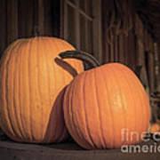 Orange Pumpkins Poster