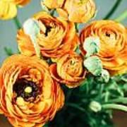 Orange ranunculus bouquet Poster