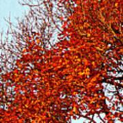 Orange Red Blanket Poster