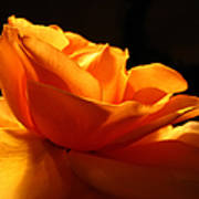 Orange Rose Glowing In The Night Poster