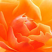 Orange Sherbet Poster