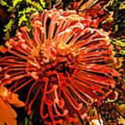 Orange Spice Floral  Poster
