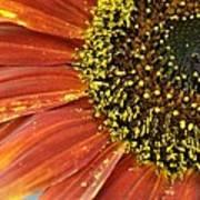 Orange Sunflower Close Up Poster