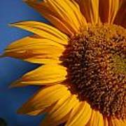 Orange Sunflower Poster