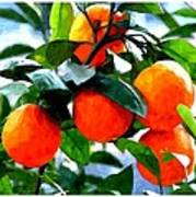 Orange Tree In Springtime  Poster