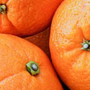 Orange Trio Poster