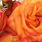 Orange Utopia Roses Poster