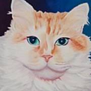 Orange White Cat Portrait Poster