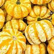 Orange Winter Squash On Display Poster