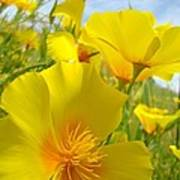 Orange Yellow Poppy Flowers Meadow Art Poster