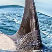 Orca Apex II Poster