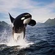 Orca Breach Poster