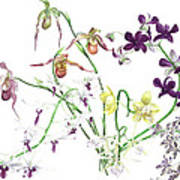 Orchid Bouquet Poster
