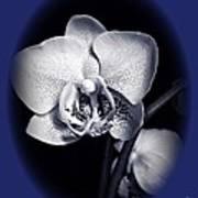 Orchid Elegance 2 Poster