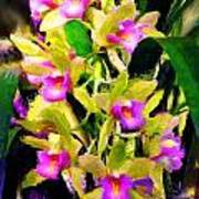 Orchid Flower Bunch Poster