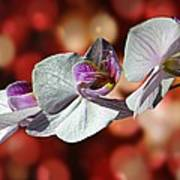 Orchid Flower Photographic Art Poster