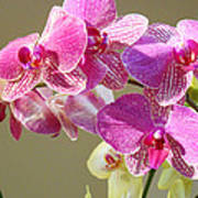 Orchid Flowers Art Prints Pink Orchids Poster