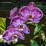 Orchid Flowers Growing Through Old Wooden Picture Frame Poster