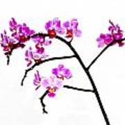 Orchid In White  Poster