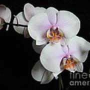 Orchid Portrait Poster