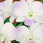 Orchid Splendor Painting Poster