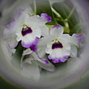 Orchid Wine Swirl Poster