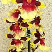 Orchids 18 Poster