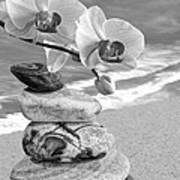 Orchids And Pebbles On The Sand In Black And White Poster