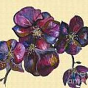 Orchids Cream Poster