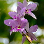 Orchids For You Poster