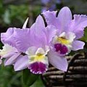 Orchids In A Basket Poster
