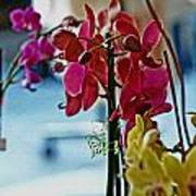 Orchids In A Window Poster