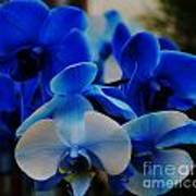 Orchids In Blue  Poster