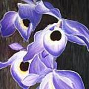 Orchids In Tewantin Poster