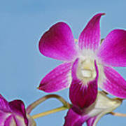 Orchids With Blue Sky Poster