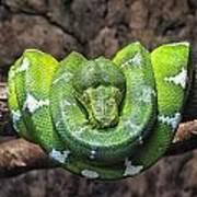 Orderly Snake Poster