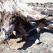 Oregon Beach - Driftwood Trunk Poster
