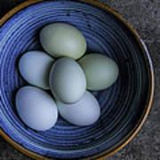 Organic Blue Eggs Poster