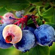 Organic Blues Poster
