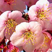 Oriental Flowers Poster