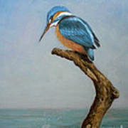 Original Animal Oil Painting Bird  Art Kingfisher On Canvas#16-2-6-15 Poster