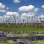 Orlando Wetlands Cloudscape Poster by Mike Reid