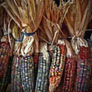 Ornamental Corn Poster
