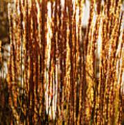 Ornamental Golden Grass Poster