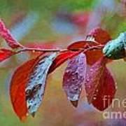 Ornamental Plum Tree Leaves With Raindrops - Digital Paint Poster